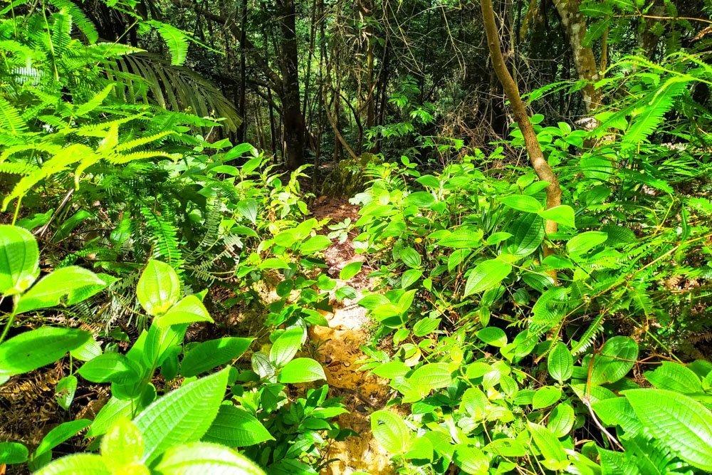 Bukit Tabur hiking trail through the forest