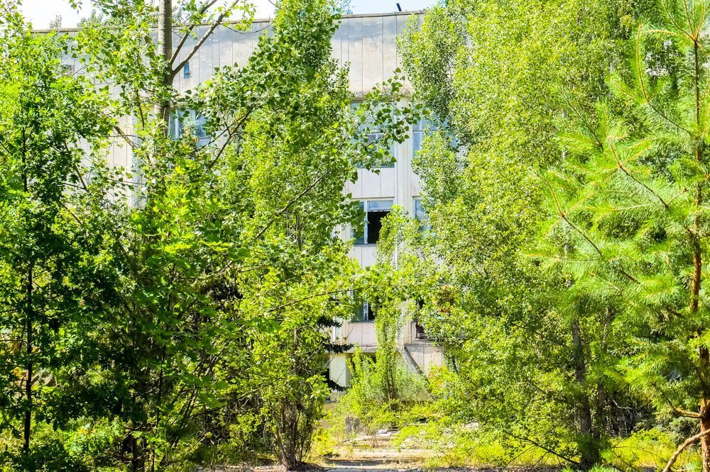 Bushes in Pripyat