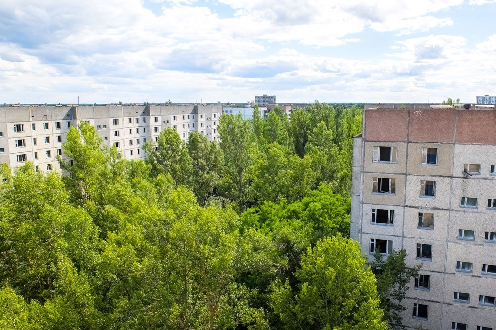 Trees growing in Pripyat
