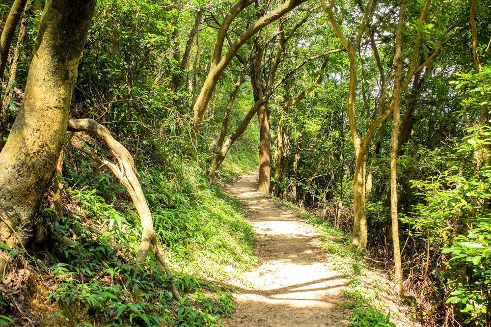 Walking through the forest in Hong Kong