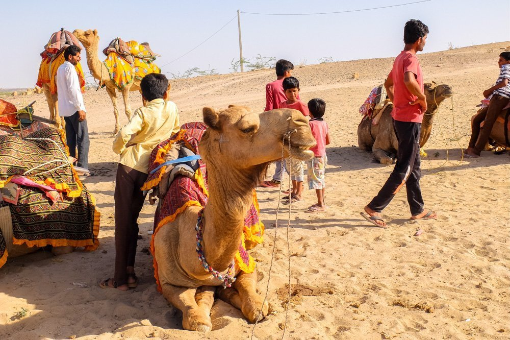 Camels and guides in Jaisalmer