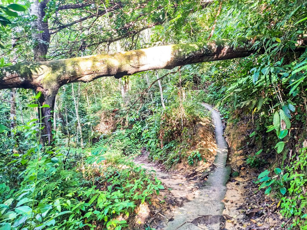 Forest trail on Penang hill