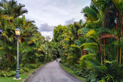 A road in the Singapore Botanic Gardens