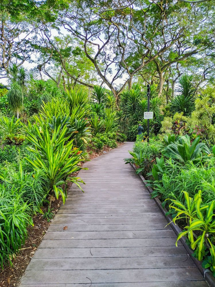 Path in the Singapore Botanic Gardens
