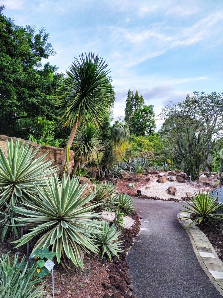 Plants in Singapore garden