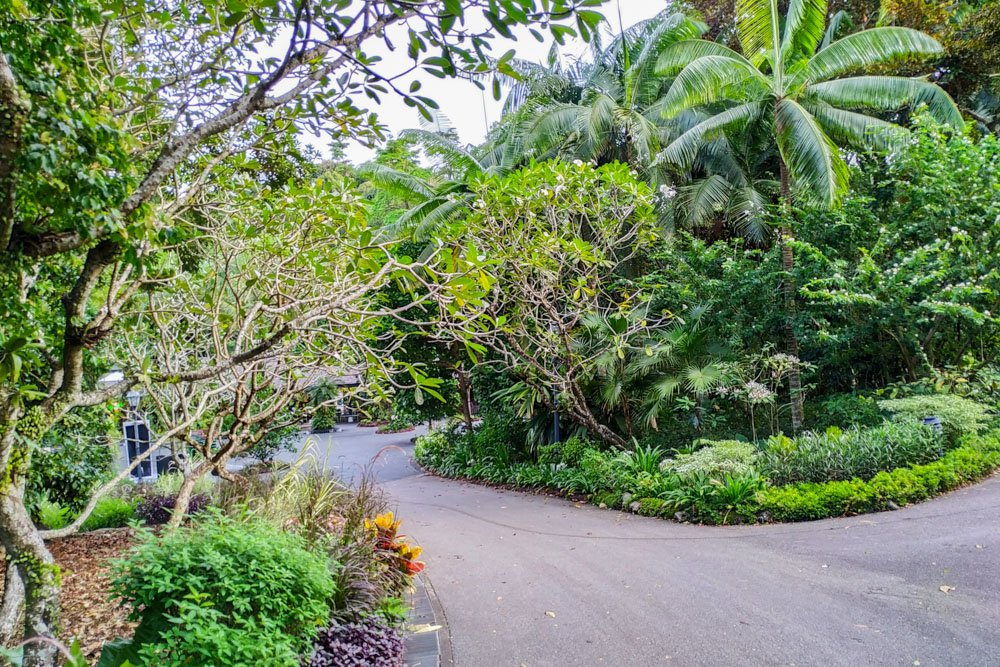 Road in botanical gardens in Singapore