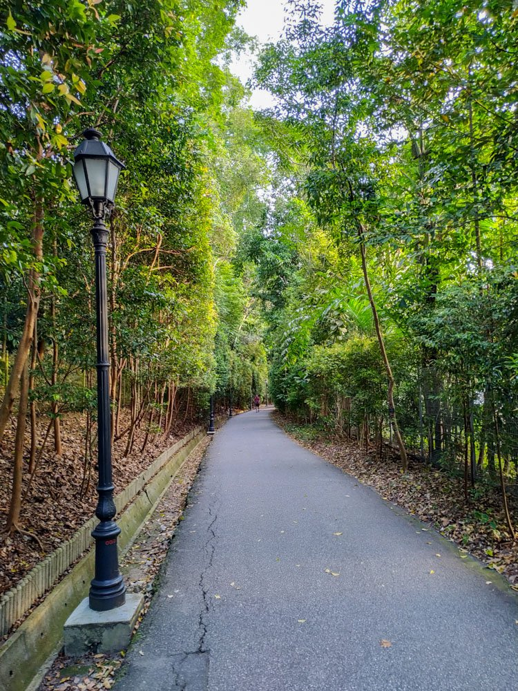 Road in the park