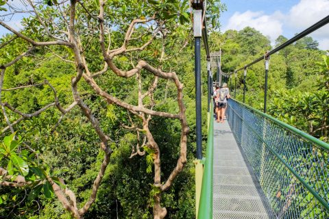 Tree Top Walk, Singapore