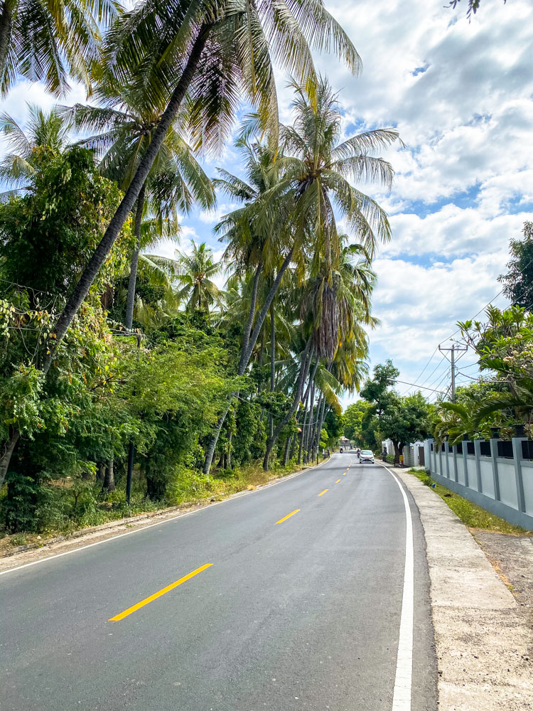 Palm trees in North Bali