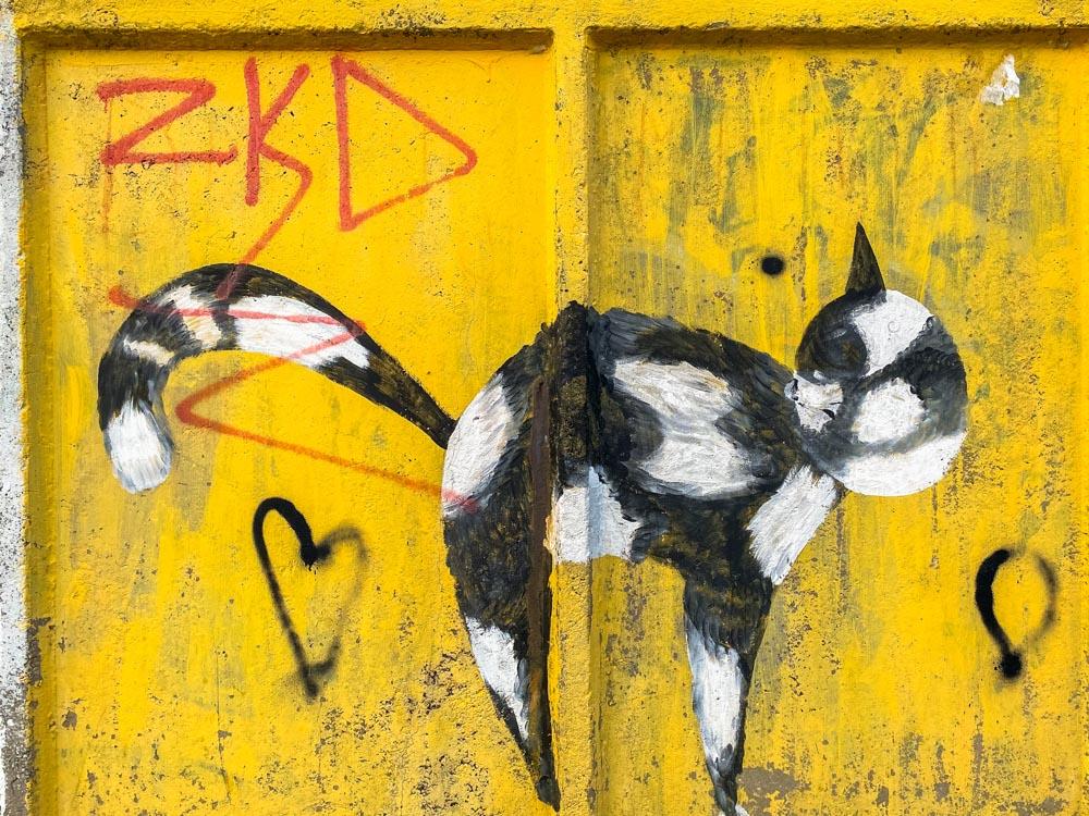 A cat graffiti