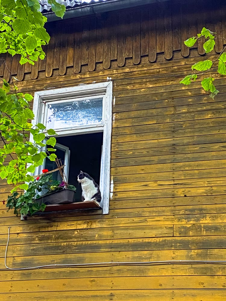 A cat in the window of a yellow house