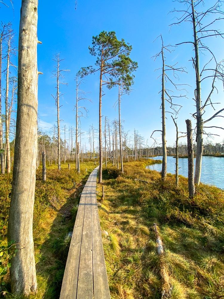 Boardwalk in Cena bog