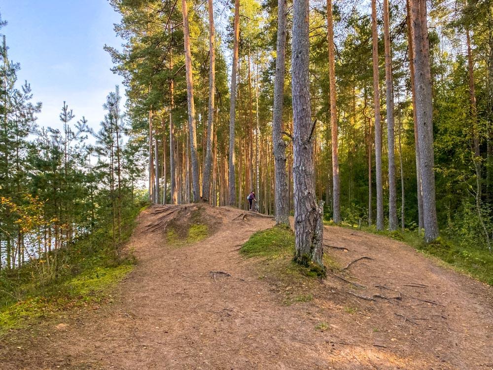 Forest in Ogre Blue Hills