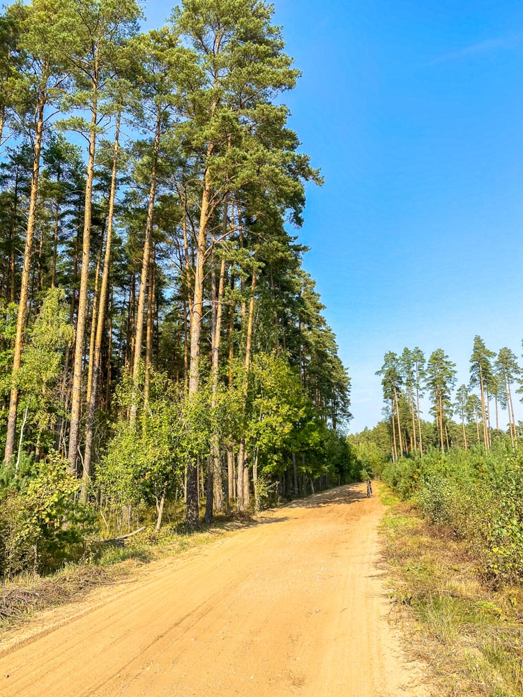 Forest road in Latvia