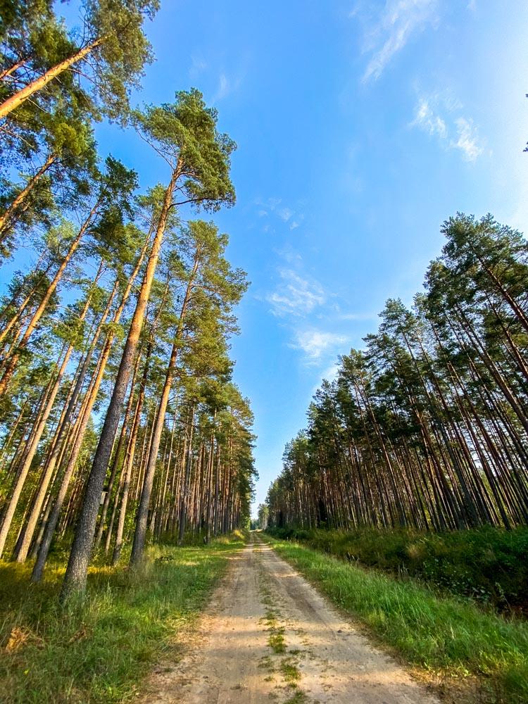 Forest road near Riga