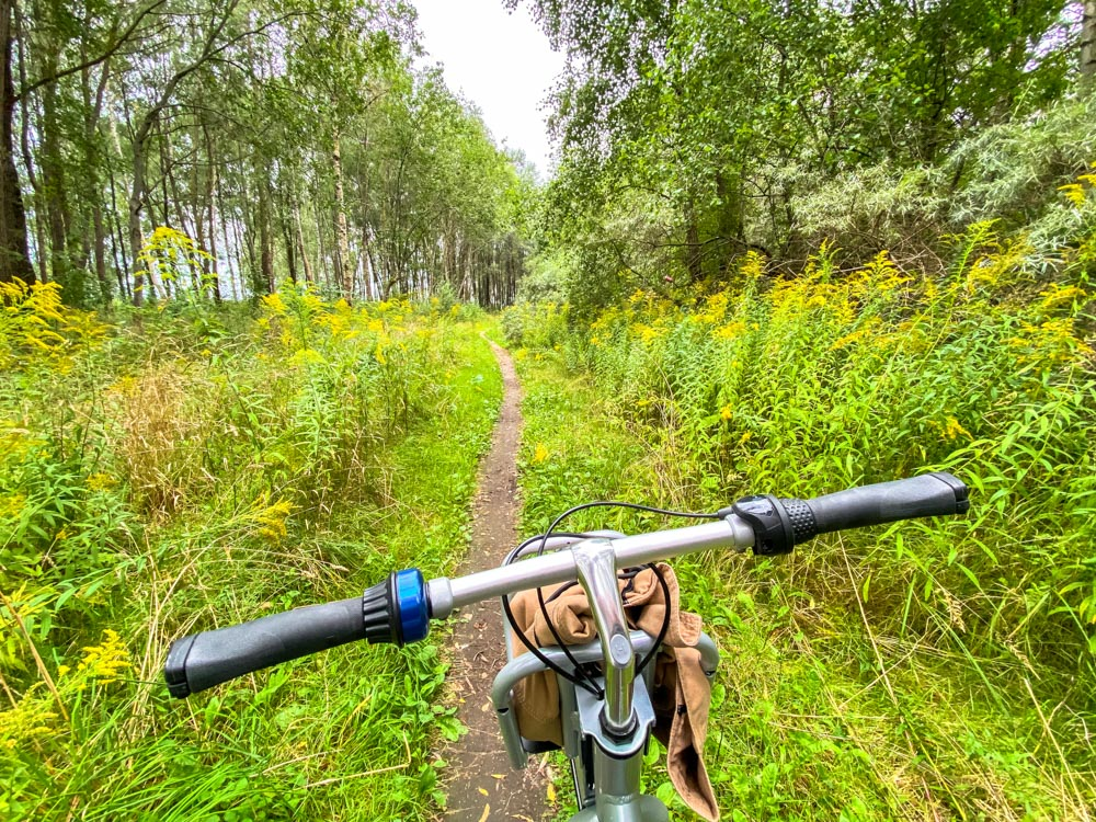 Riding a bicycle through the forest