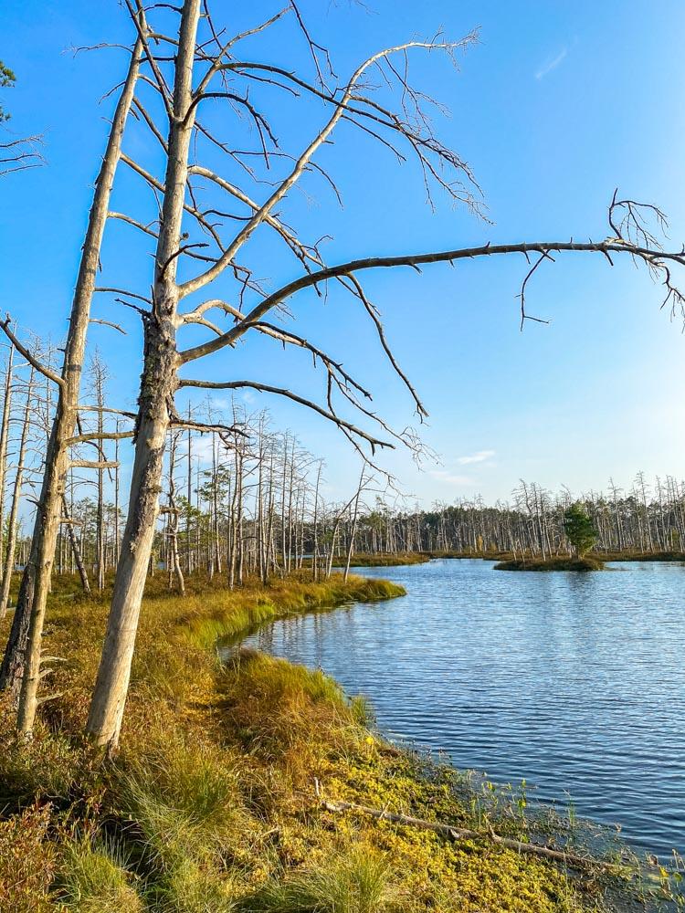 Skaista lake in Cena bog