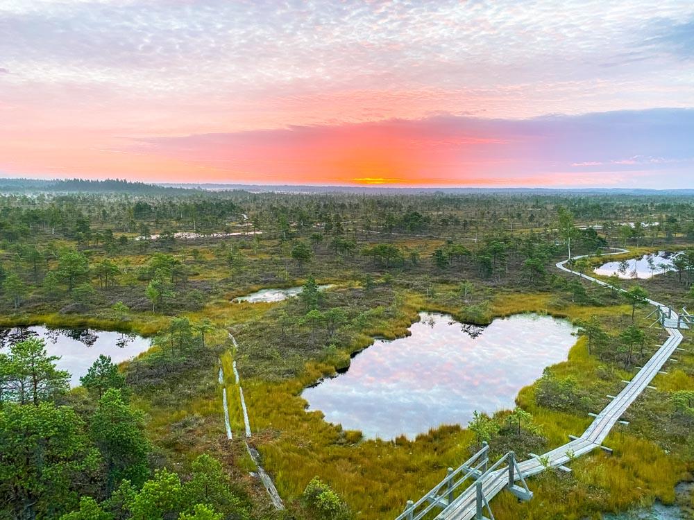 Sunrise in Kemeri bog