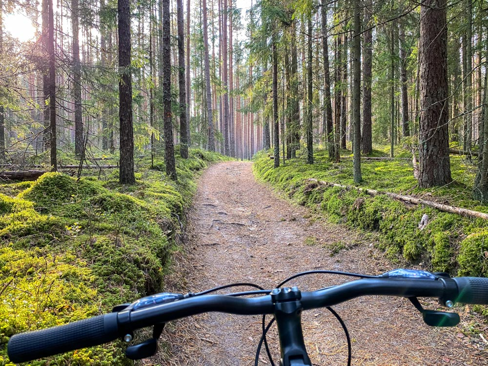 Cycling on a forest path to Cesis
