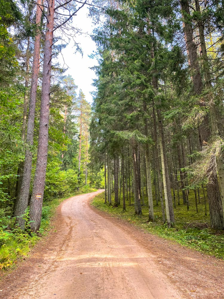 Forest road in the woods in latvia