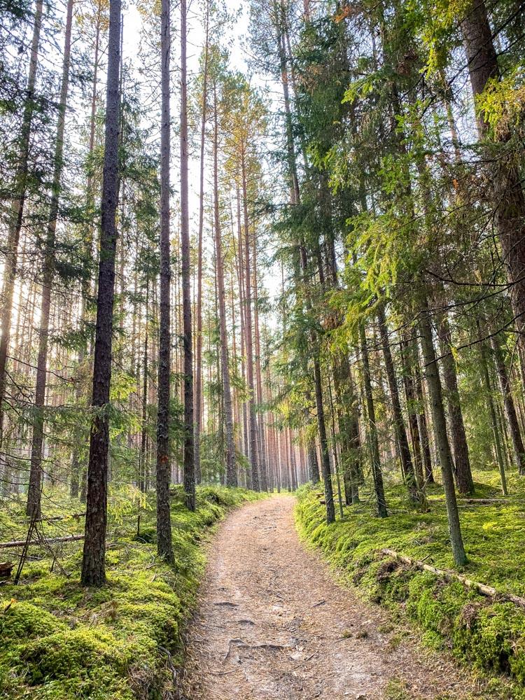 Forest road on Meztaka trail