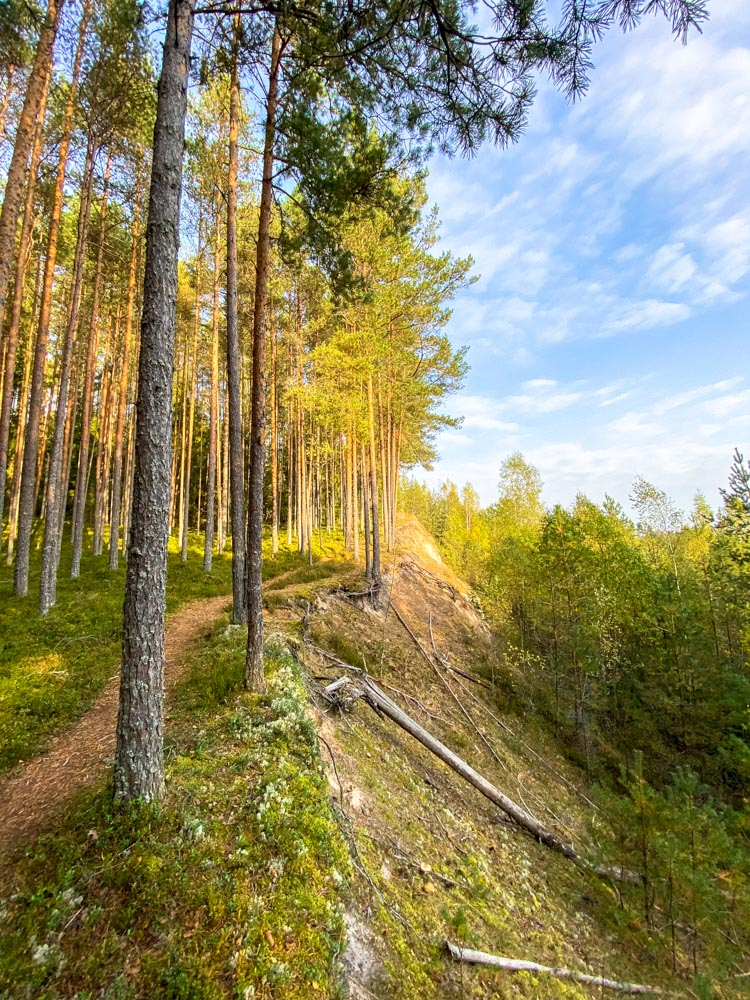 Forest trail on Meztaka trail in Latvia