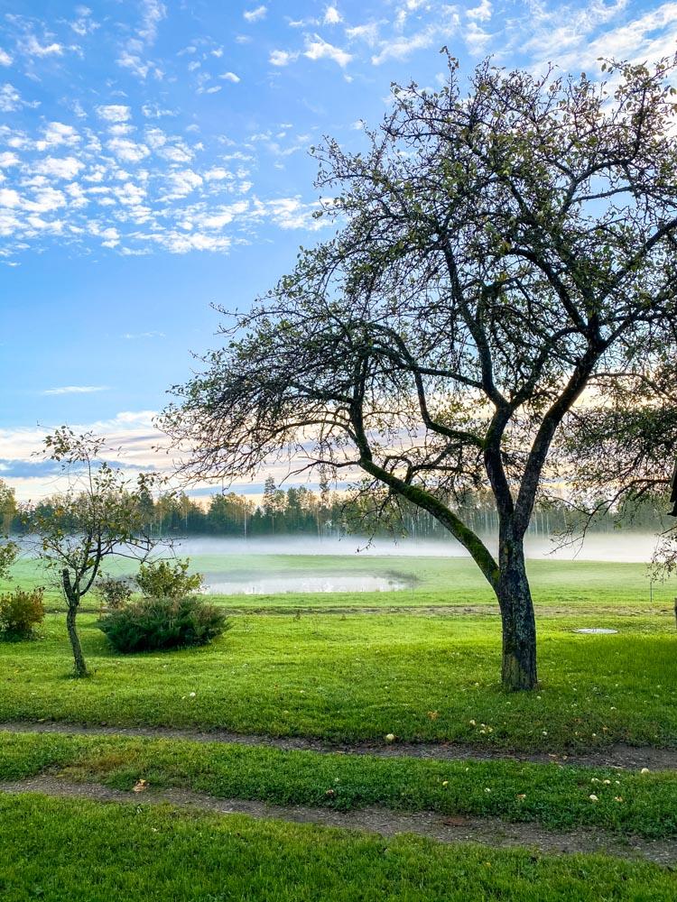 Mist over green fields in Latvia