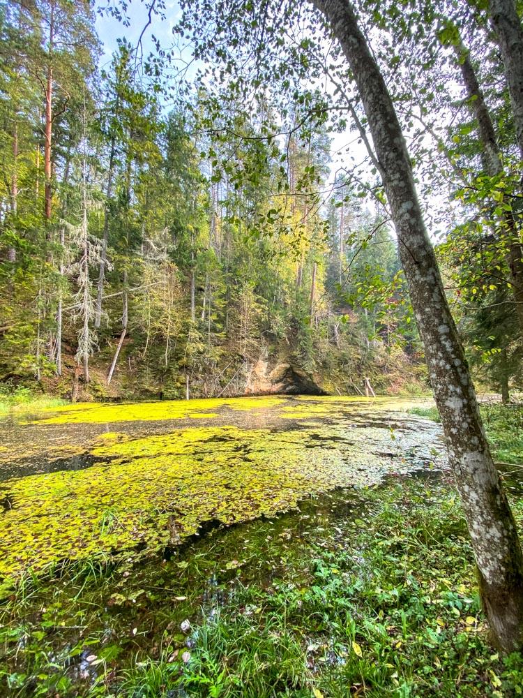 Pond in a park near Cesis