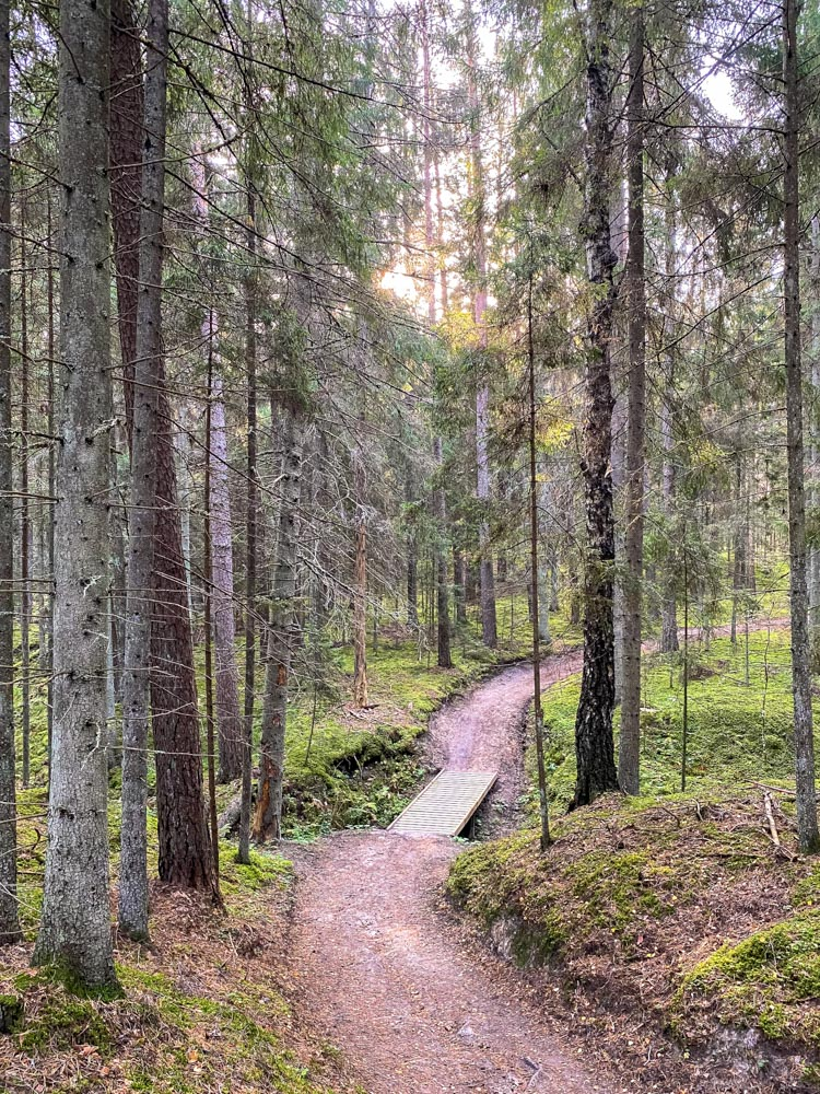 Small wooden bridge in a forest in Latvia