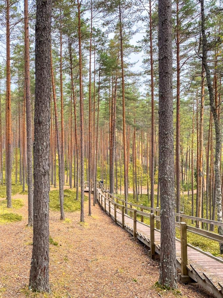 Stairs to Sietiniezis viewpoint