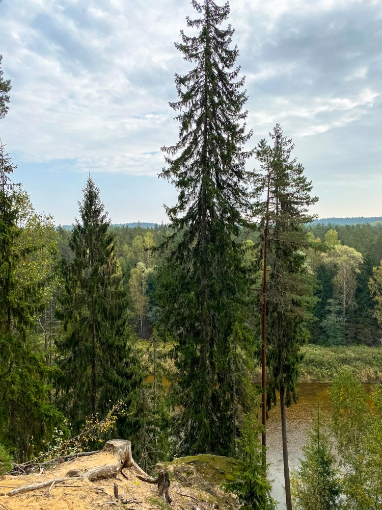 Views of the forest and Gauja river