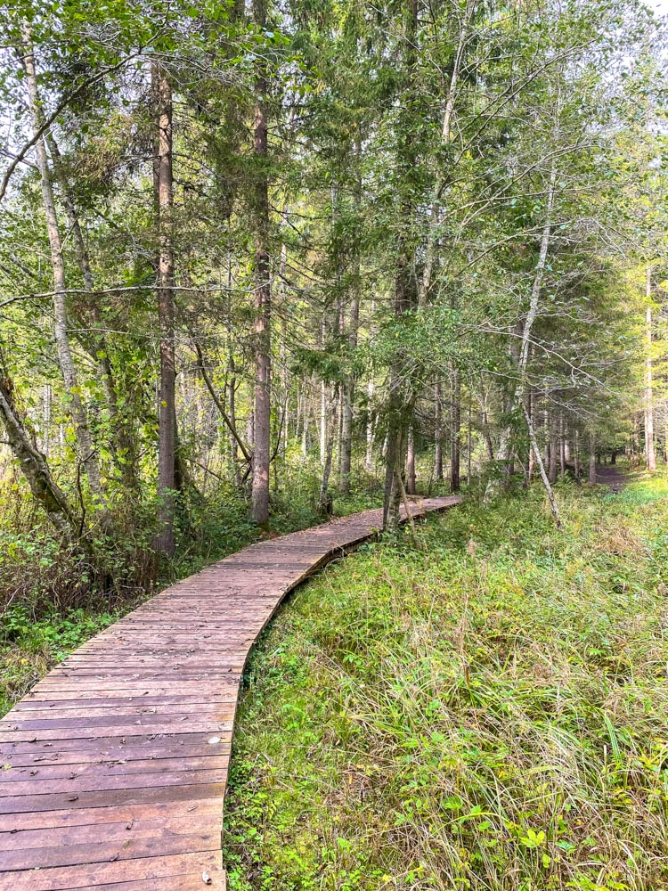 Wooden pathway in the woods near Cesis, Latvia