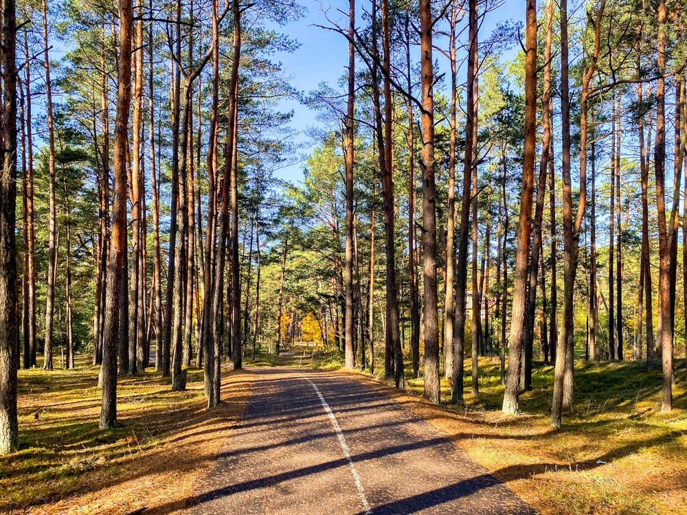 Riga - Jurmala Bike Path through forest