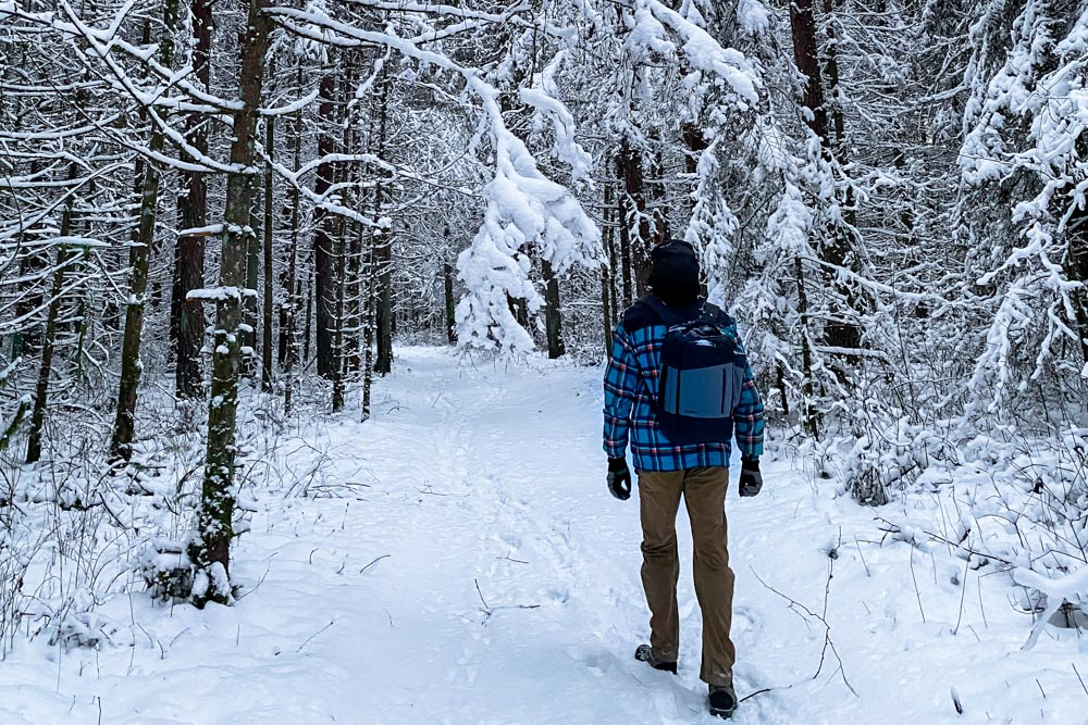 Hiking in the forest during the winter