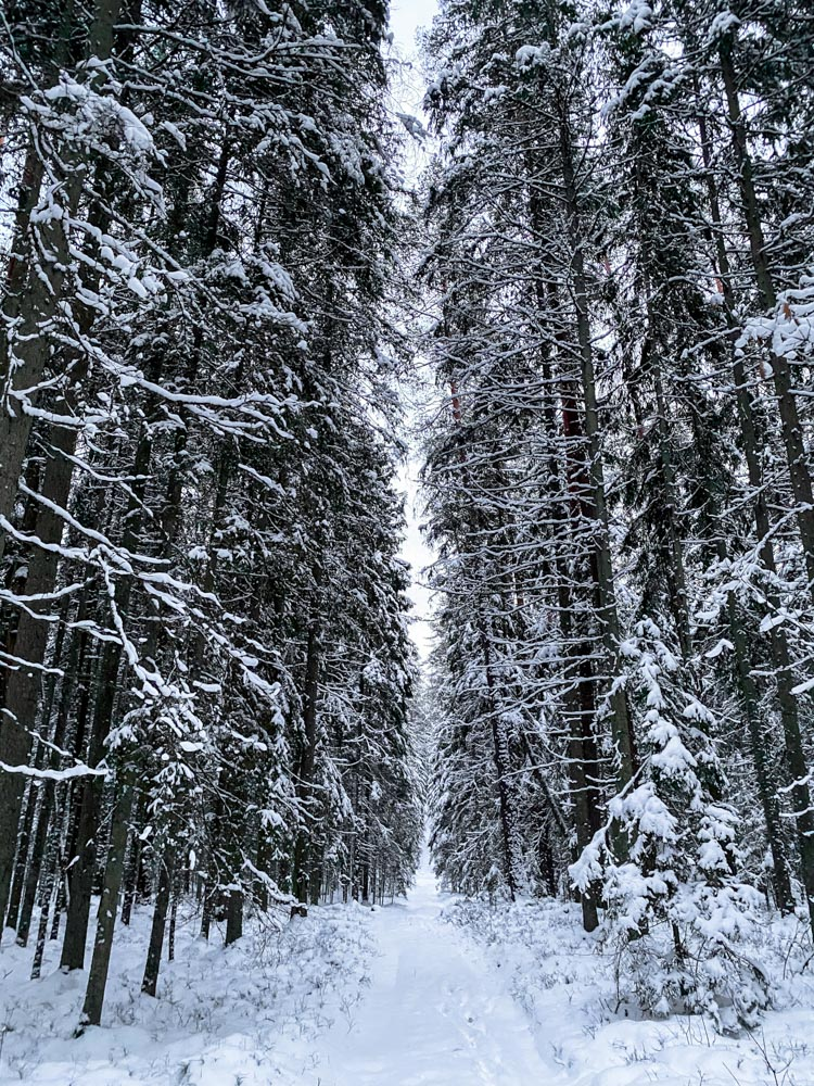 Walking through dark forest