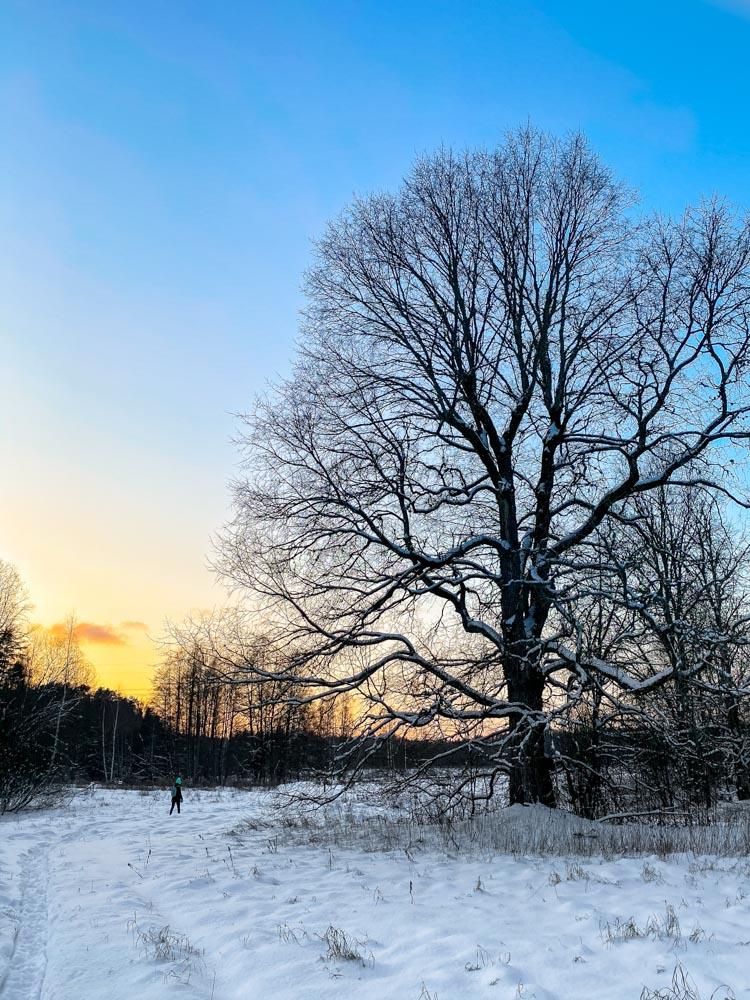 Winter sunset in Latvia