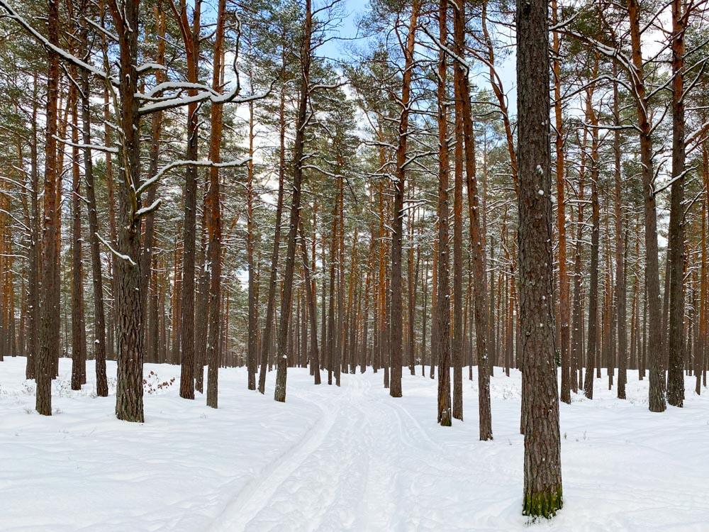 Forest near Lielupe