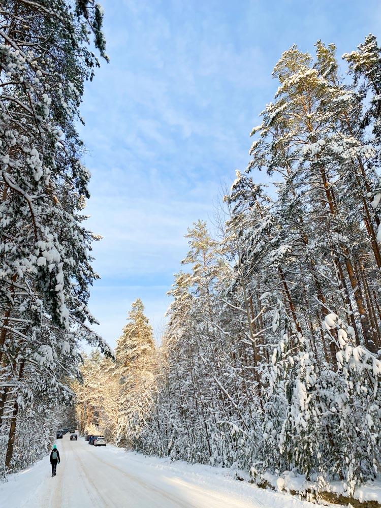 Forest road near Garkalne