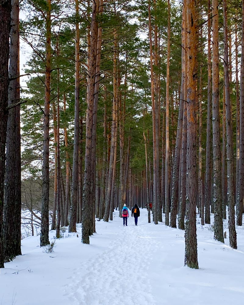 Hike from Lilaste to Gauja