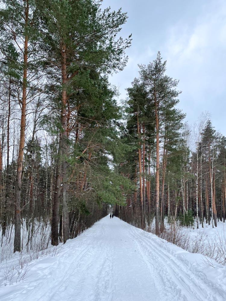Forest near Ziepniekkalns