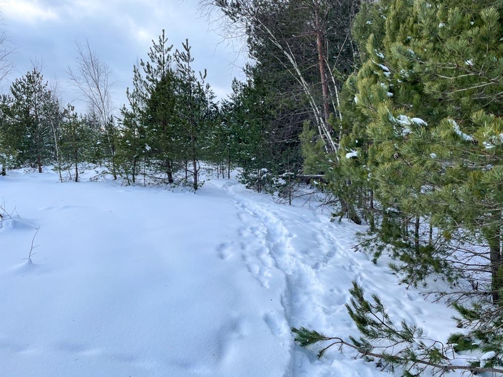 Snowy trail near Riga