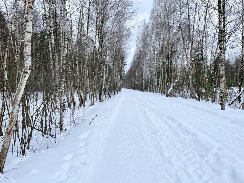 Ziepniekkalns forest hike