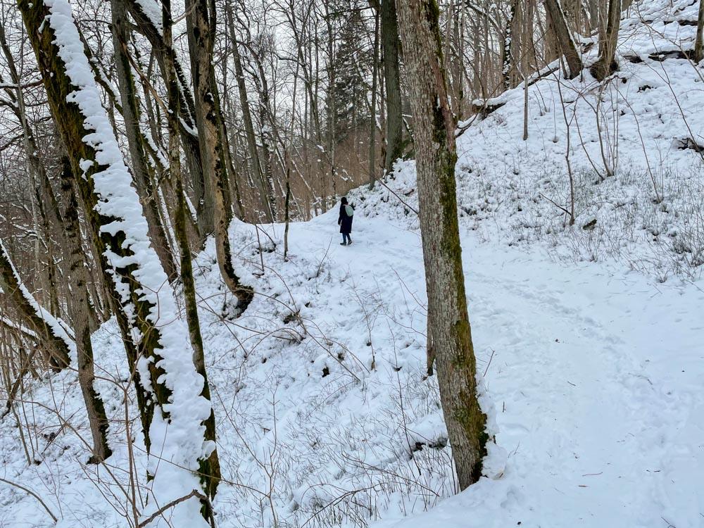 Forest trails near Sigulda
