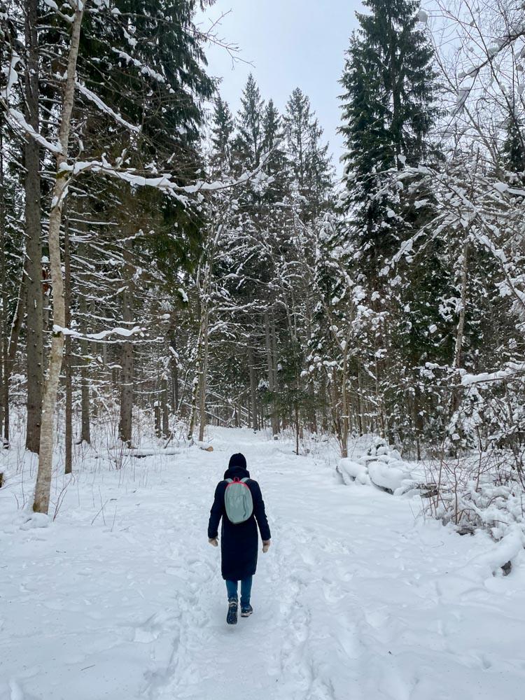 Winter hiking in Latvia