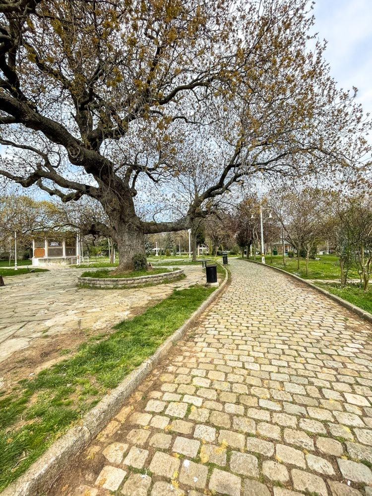 Big tree in Fenerbahce Park, Istanbul