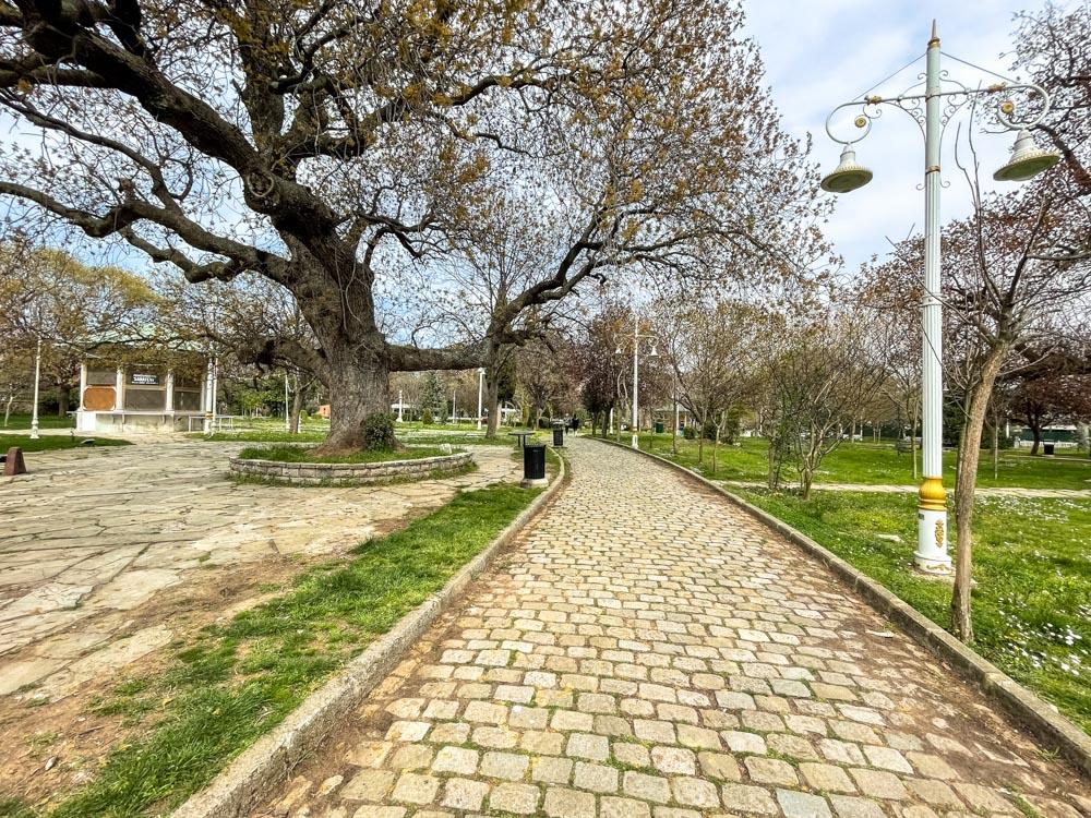 Big tree in Fenerbahce Park
