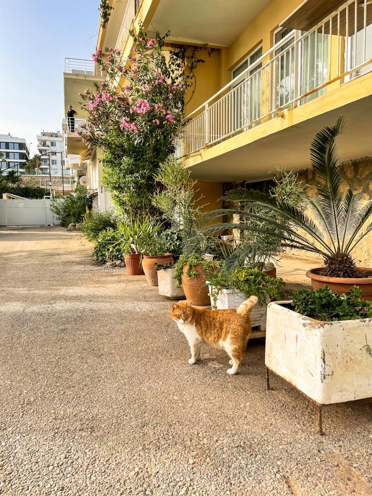 Cat walking in Antalya