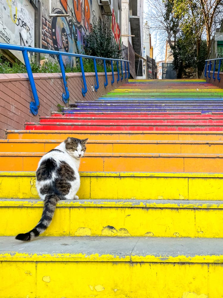 Colorful stairs and a cat in Istanbul