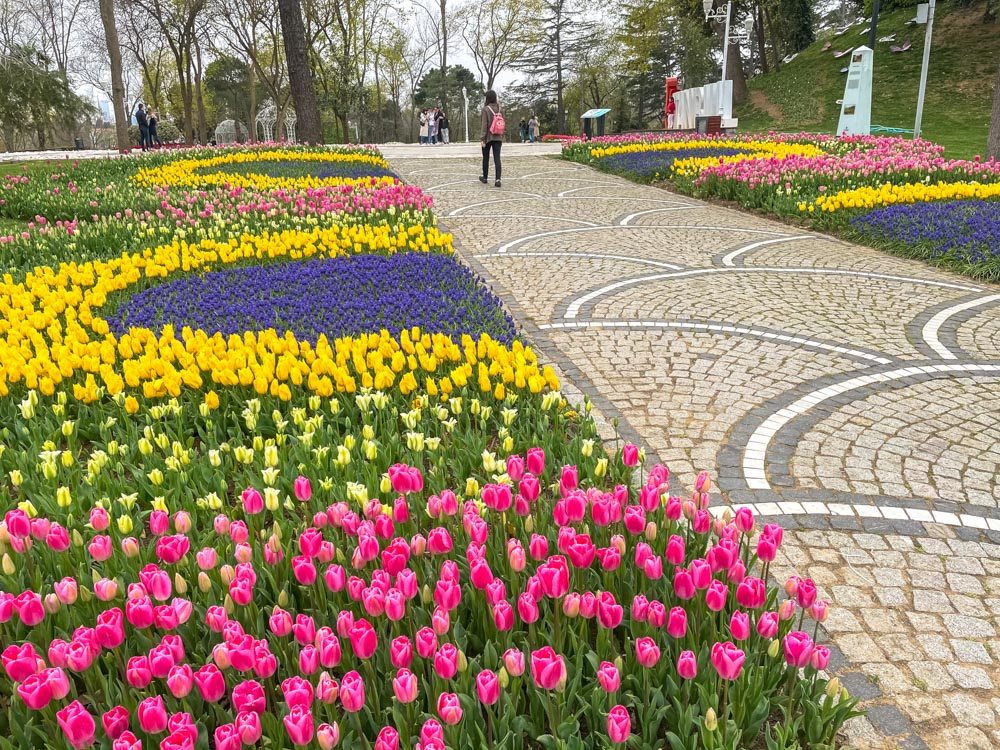 Colorful tulips on both sides in Emirgan Park