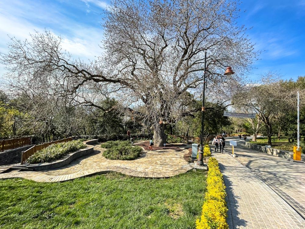 Fethipasa Sosyal Tesisleri park
